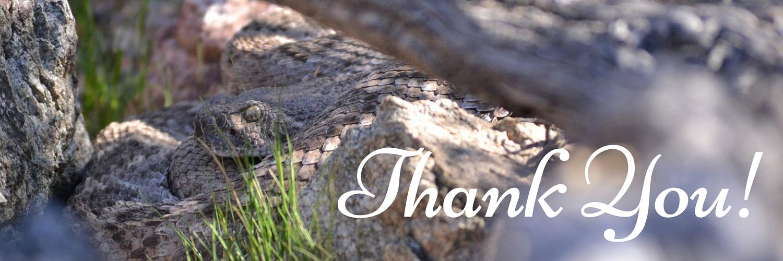Thank You! written on photo of a Western Diamond-backed Rattlesnake
