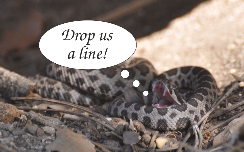 "Baby rattlesnake says ""Drop us a line"""