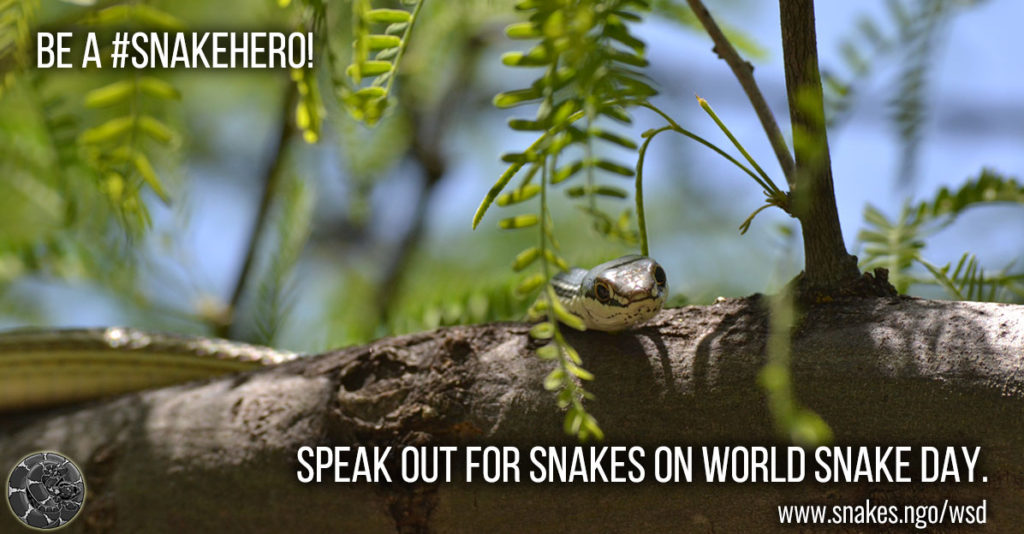 "Image of a Sonoran Whipsnake resting on a branch with ""Be a #SnakeHero. Speak out for snakes on World Snake Day"" written on it."