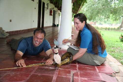 Jesús measures a Green Anaconda