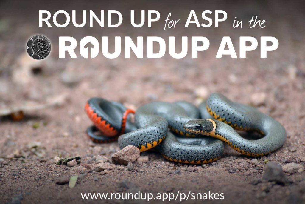 """Round Up for ASP in the RoundUp App"" written on an image of a Ring-necked Snake."