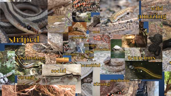 """Collage of snake and lizard photos with """"striped"""" """"social"""" """"beautiful"""" and other descriptors of snakes written on it"""