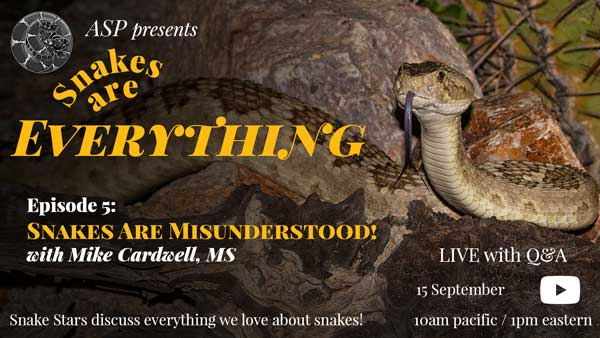 """""""Snakes Are Everything Episode 5: Snakes Are Misunderstood"""" written on an image of a Mohave Rattlesnake"""